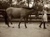 arielle-kebbel-horse-3